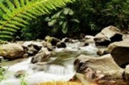 Thumbnail La Fortuna River, fern, Costa Rica