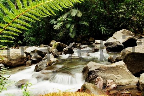 Product picture La Fortuna River, fern, Costa Rica